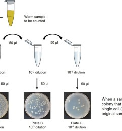 figure 1 diagram of how to prepare bacterial dilutions serial dilution of an initial culture to obtain solutions that are 1 10th 1 100th and 1 1 000th  [ 1851 x 1239 Pixel ]