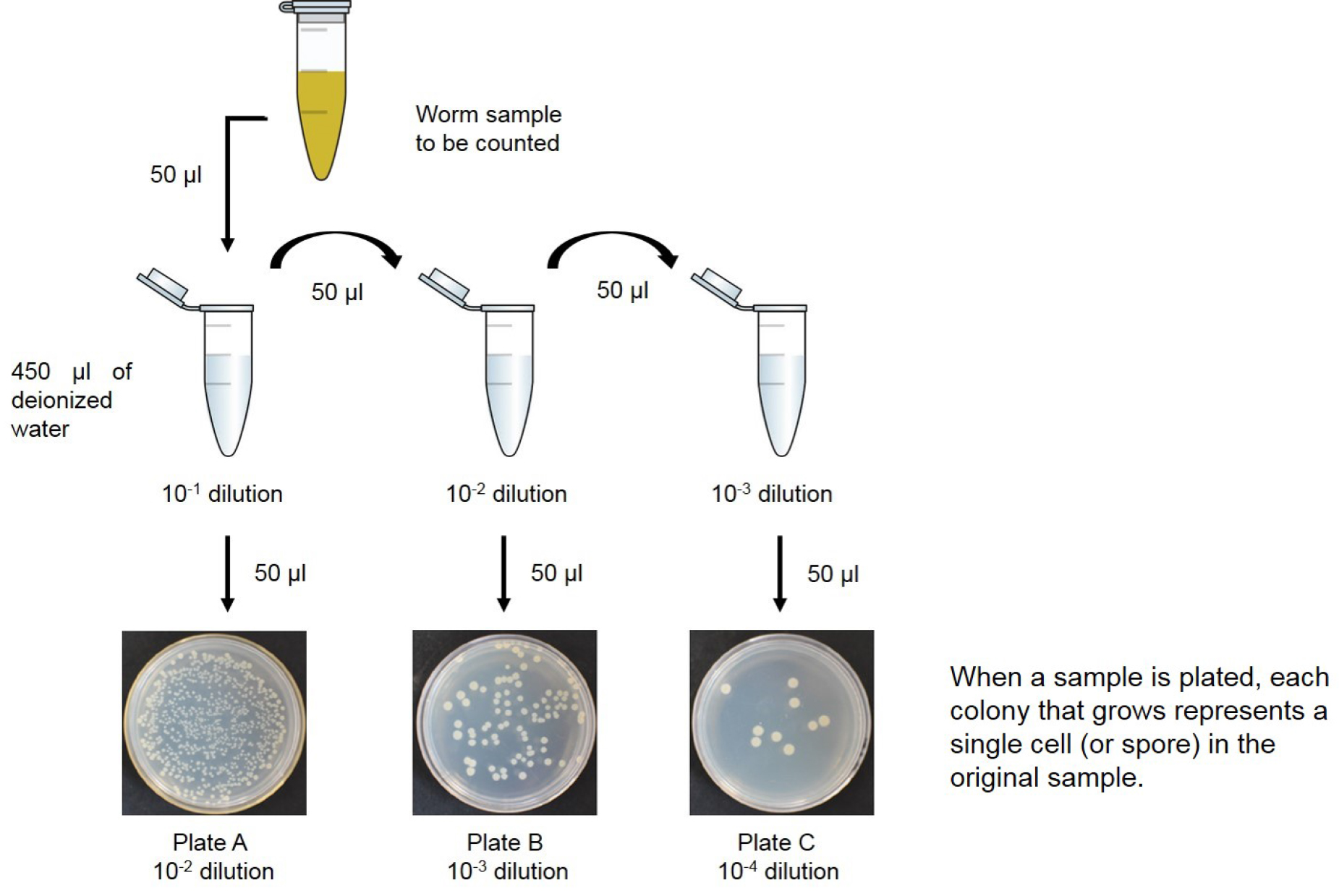 hight resolution of figure 1 diagram of how to prepare bacterial dilutions serial dilution of an initial culture to obtain solutions that are 1 10th 1 100th and 1 1 000th