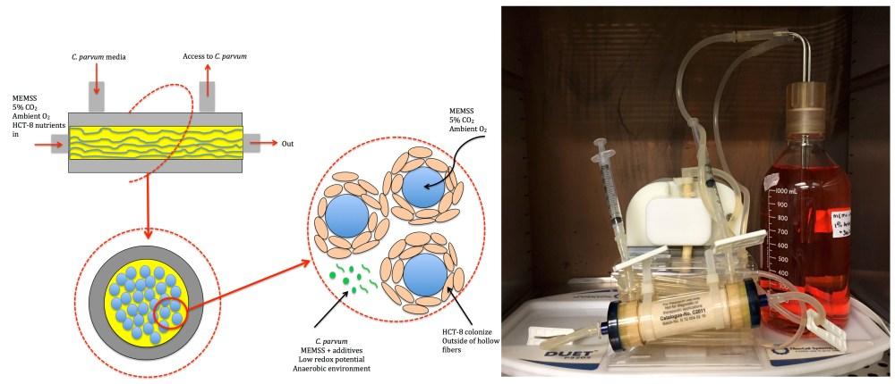 medium resolution of figure 1 hollow fiber bioreactor a schematic representation of the hfb b hfb setup