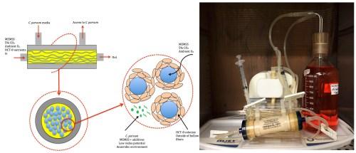 small resolution of figure 1 hollow fiber bioreactor a schematic representation of the hfb b hfb setup