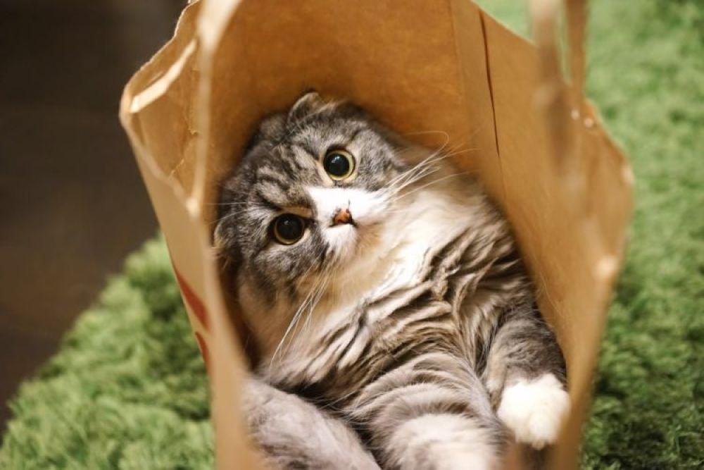 猫カフェ 4