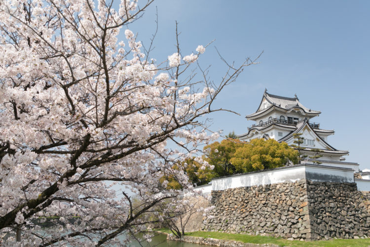 Picture of Kishiwada Castle in full Cherry Blossom
