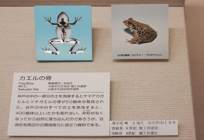 大阪歴史博物館 (41)