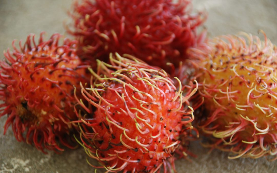 How to Eat Rambutan Fruit or Mamones Chinos