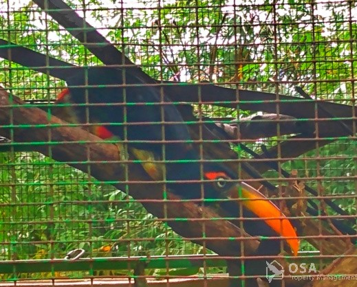 aracari toucan aracari toucan altura wildlife sanctuary