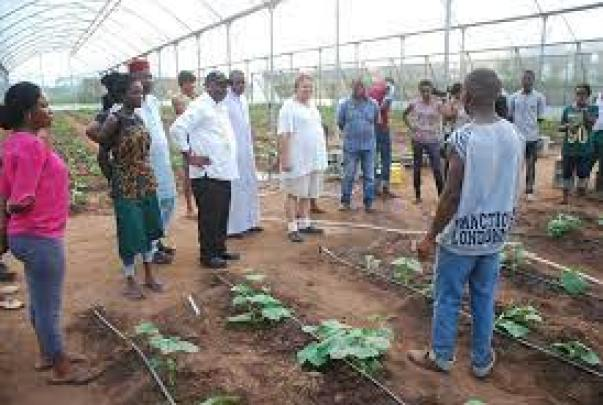 IITA establishes two agribusiness incubation centers in Imo state
