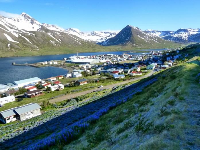 Overlooking the town of Siglufjörður