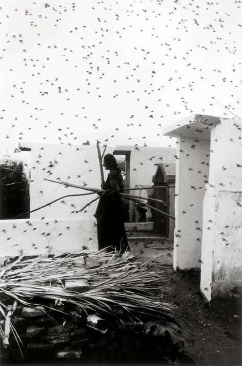 Graciela Iturbide. Cementerio. (Juchitán, 1979)