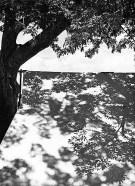 Luz restirada. 1944