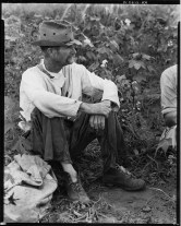 Bud Fields in his cotton patch Hale County Alabama Walker Evans