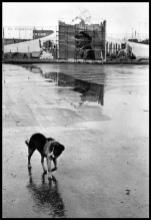RUSSIA. Siberia. Bratsk. 1967.Elliott Erwitt
