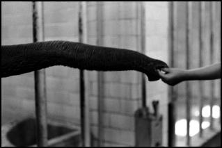USA. New York. Central Park Zoo. 1953.Elliott Erwitt