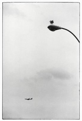 USA. New York City. 1975.Elliott Erwitt