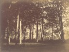 Gustave_Le_Gray_(French_-_Study_of_Trees_and_Pathways_-_Google_Art_Project