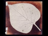 Photogenic drawing negative of a leaf by William Henry Fox Talbot