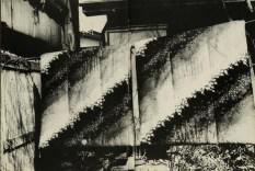 Daido Moriyama, light and shadow_70