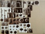 working_collage_karl_blossfeldt_4
