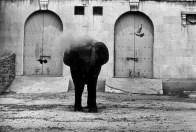 Warri_Winogrand_New York, ca. 1963-_zoo_10