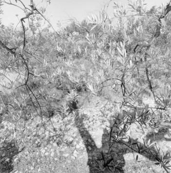 Friedlander_Apples-and-Olives-13-564x570