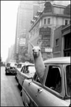 NY 1957