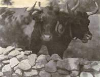 gertrude_Kasebier_mis_vecinos_1905