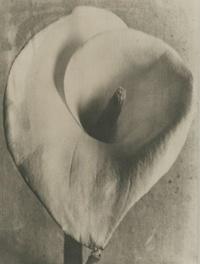 tina_modotti_platino_1924-1926