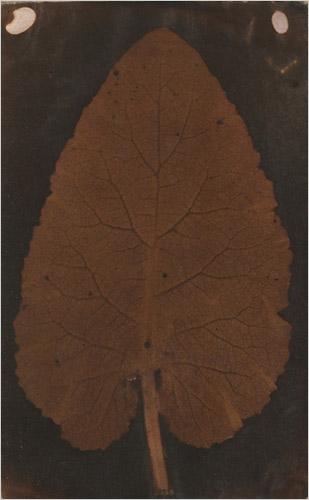 leaf_disputa_talbot_wedgwood