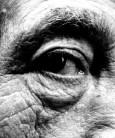 Giacometti's Eye