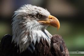 Aguila-Calva