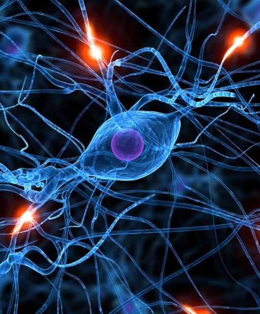 Óscar León: La neurociencia y el abogado: el efecto pigmalión