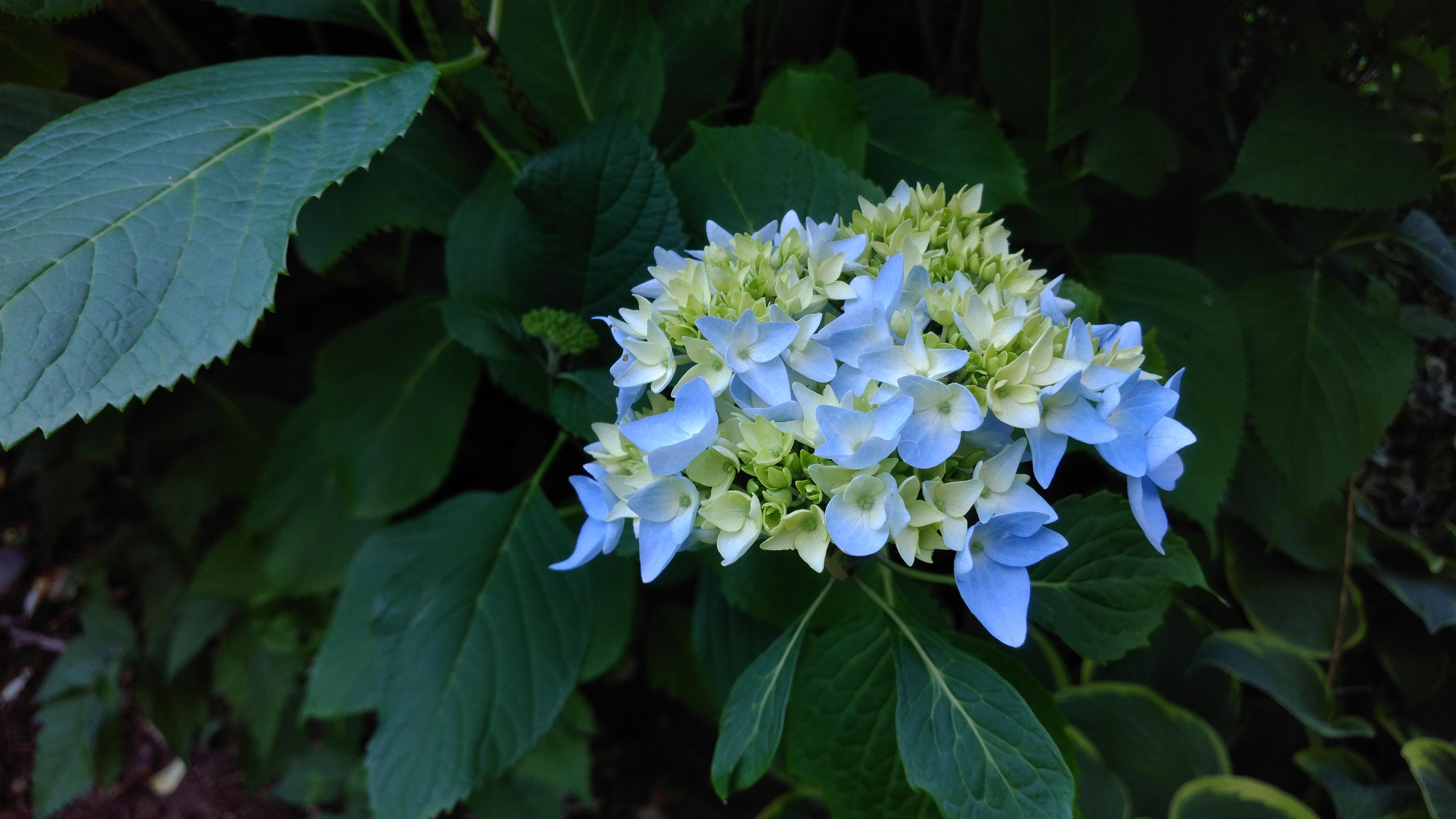 Gardening Update May 30, 2017