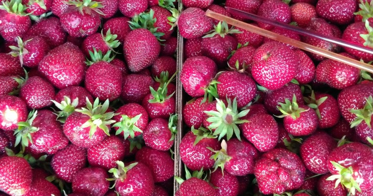 Strawberry Picking 2017 Part 1: Drying and Freezing