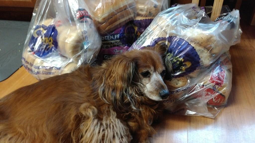 dachshund bread