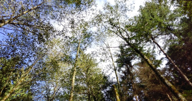 The Importance of Walking in the Wood With Kids