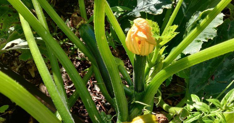 Gardening Update 09.05.2020