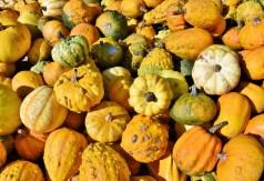 pumpkin-3693244_1920