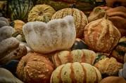 pumpkins-3696371_1920