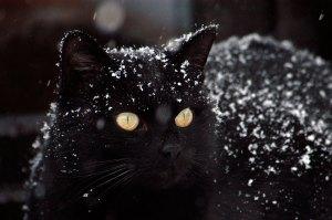 Beleza negra - Fotos de gatos