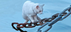 Os gatos que amam água