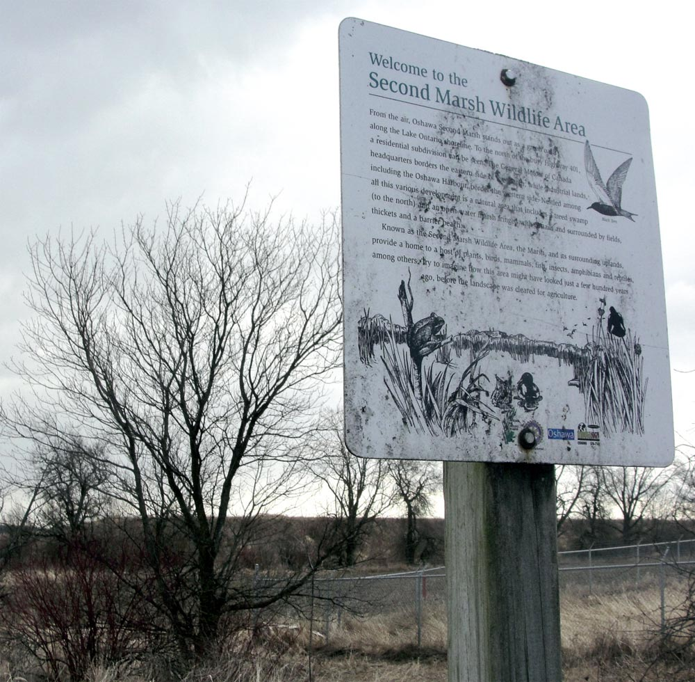 The Bob Mills Trail, which runs through the northern reaches of the Second Marsh, will be closed due to safety concerns, including trees deteriorating as a result of Emerald Ash Borer.