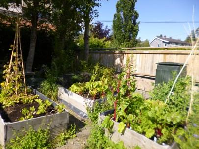 School Garden in July