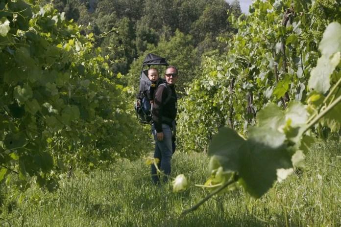 Visita às vinhas da Quinto do Soalheiro. Foto @Município de Melgaço