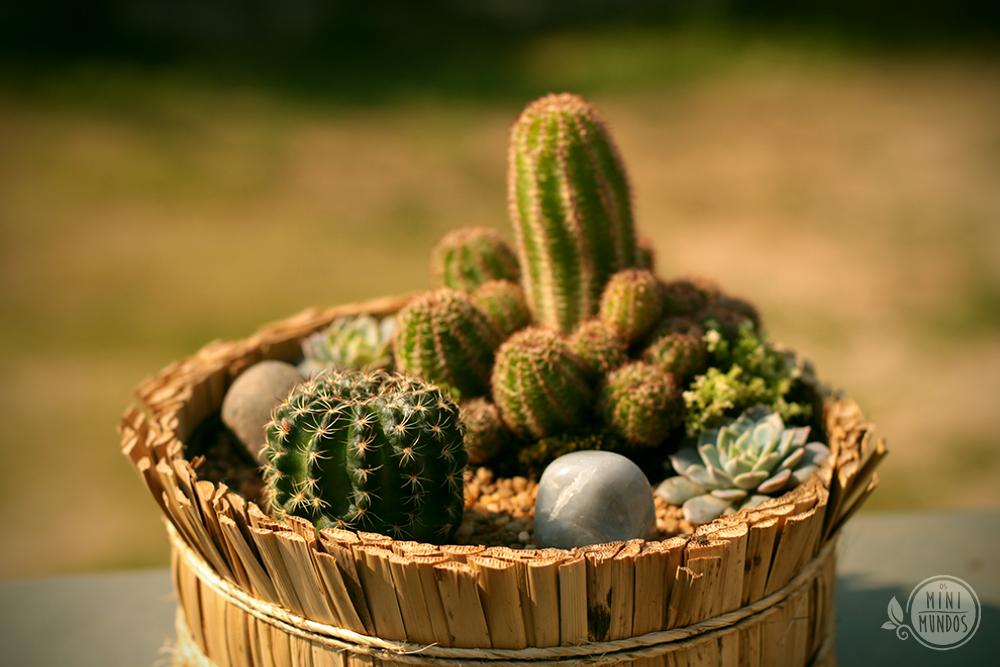 Cactus Mundi  os mini mundos