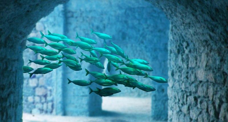 Osmoseanlage für das Aquarium 5