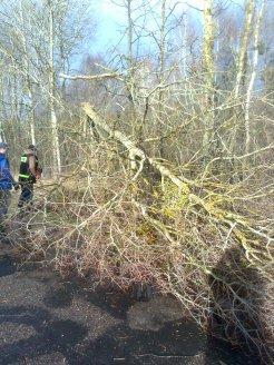 akcja usuwania drzew (1)