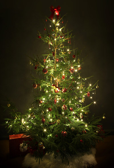The 8 Basics of Decorating Your Christmas Tree  Online Star Register