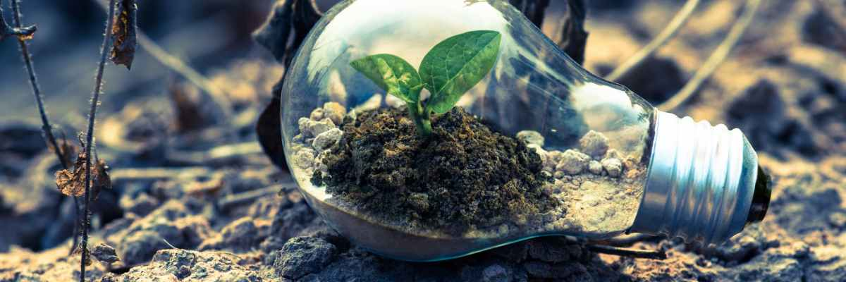 Aziende ecosostenibili tra i nuovi trend di Google