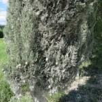 cava albero