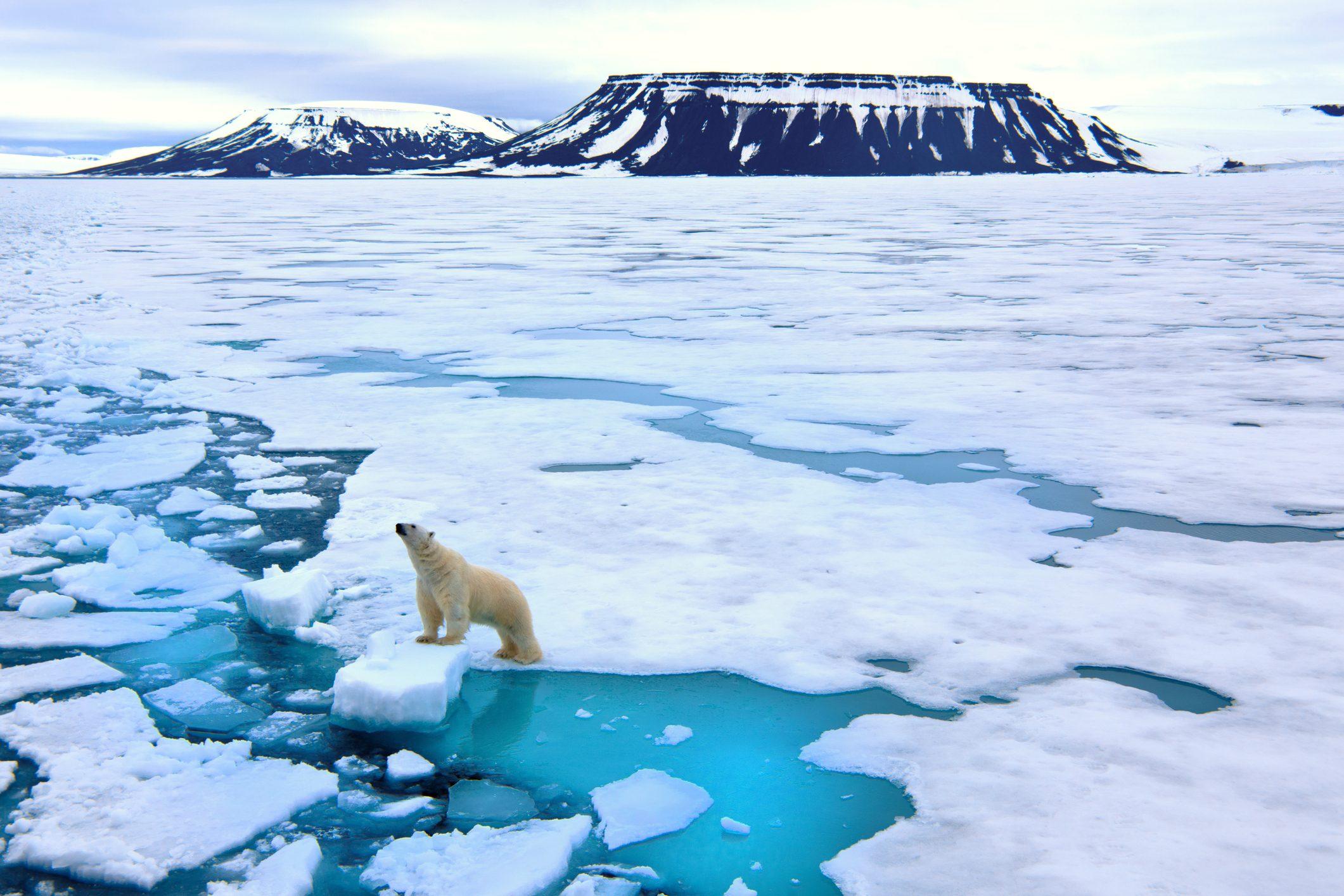Artico Arctic