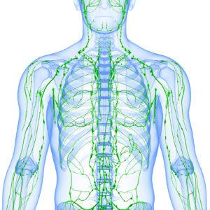 White Body Green Lymphatic Vessels
